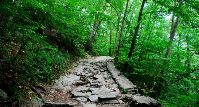 path-valley-green-wissahickon-park-philadelphia-pennsylvania-usa_main