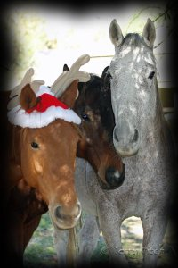 Pele, Bart and Harley ~ photo by Terry Fitch